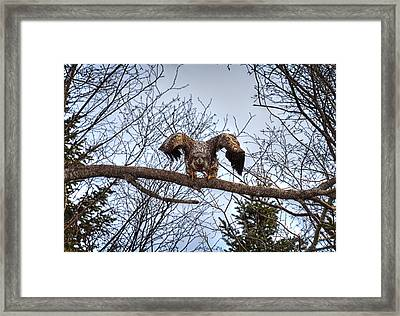 Got You - Great American Bald Eagle Framed Print by Gary Smith