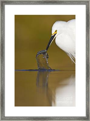 Framed Print featuring the photograph Gotcha by Bryan Keil