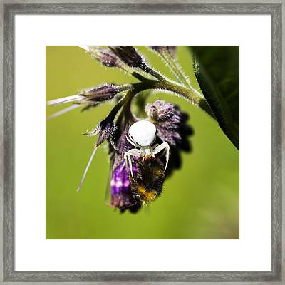 Gotcha Framed Print by David Davies