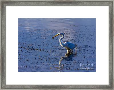 Gotcha Framed Print by Marvin Spates