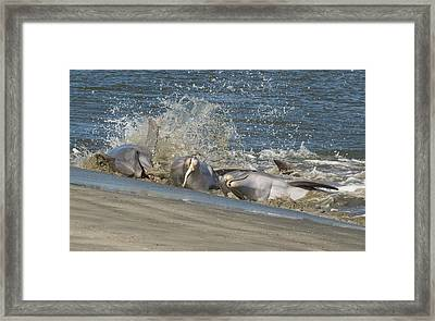 Framed Print featuring the photograph Gotcha by Patricia Schaefer