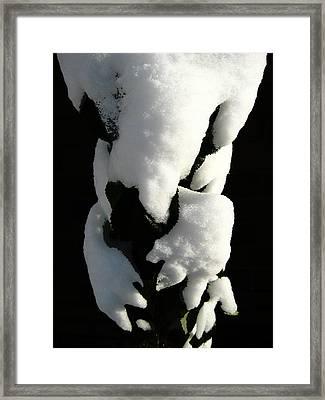 Gotcha Framed Print by Shirley Sirois
