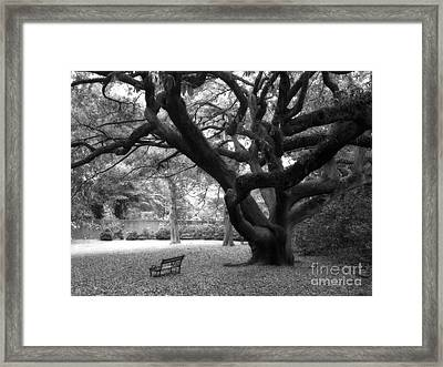 Gothic Surreal Black And White South Carolina Angel Oak Trees Park Landscape Framed Print by Kathy Fornal