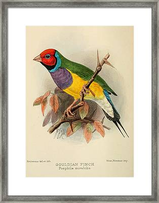 Gouldian Finch Framed Print by Dreyer Wildlife Print Collections