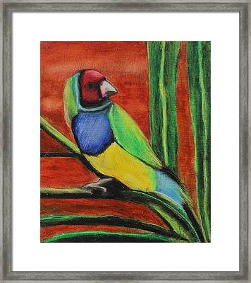 Framed Print featuring the painting Gouldian Finch by Jeanne Fischer