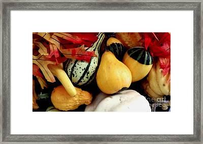 Gourd Group Of Fall's Bounty Framed Print