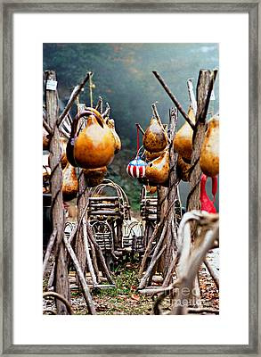 Gourds 2002 Framed Print