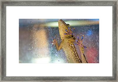 Grab A Hold Framed Print