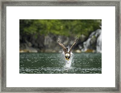 Apex Framed Print by Ted Raynor