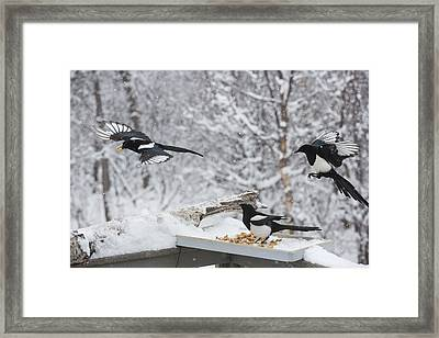 Grabbing The Goodies Framed Print