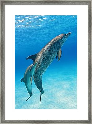 Grace Framed Print by Aaron Whittemore
