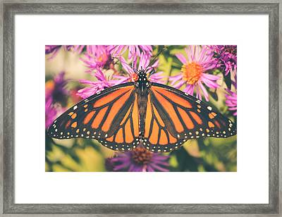 Framed Print featuring the photograph Grace And Beauty by Viviana  Nadowski