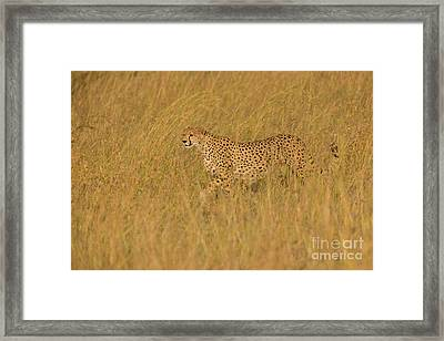 Grace And Elegance Framed Print by Ashley Vincent