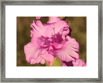 Grace Framed Print by Carol Groenen