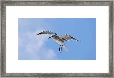 Grace In Flight Framed Print by Kenneth Albin