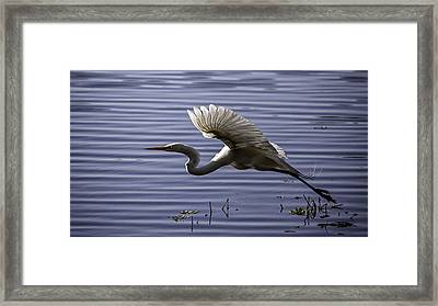 Grace In Motion Framed Print by Lynn Palmer
