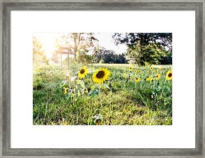 Grace Plantation Framed Print by Scott Pellegrin