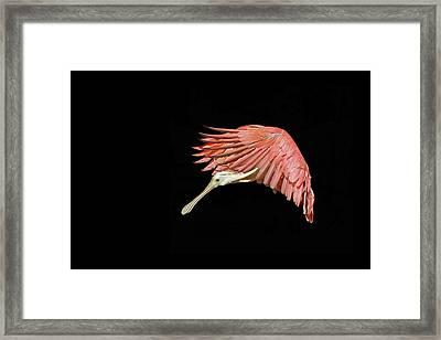 Grace Framed Print by Stuart Harrison