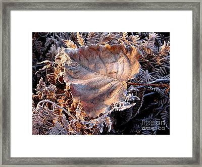 Graced By Frost Framed Print