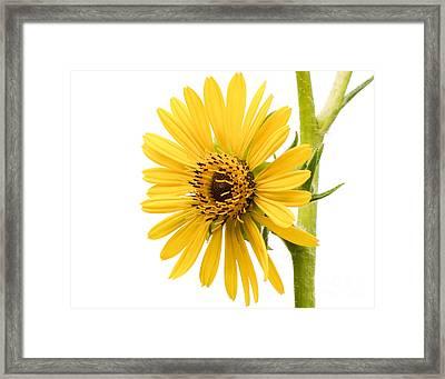 Graceful Beauty II Framed Print by Anita Oakley
