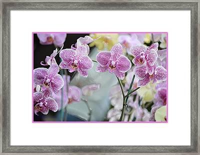 Graceful Beauty Framed Print