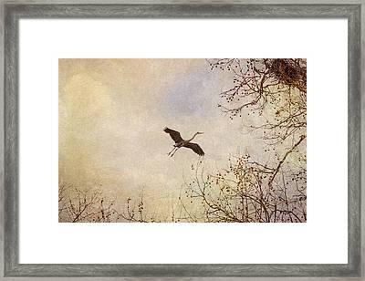 Graceful Form Framed Print by Dale Kincaid