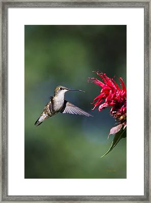 Graceful Hummingbird In Flight Framed Print