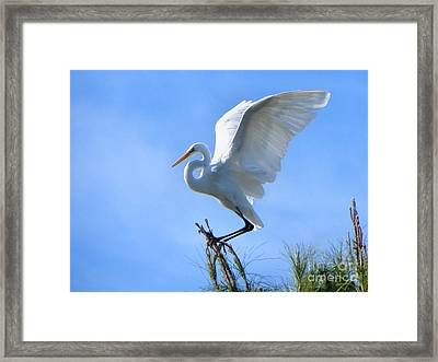 Framed Print featuring the photograph Graceful Landing by Deb Halloran