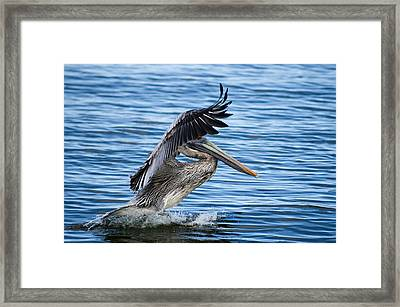 Framed Print featuring the photograph Graceful Landing by Gregg Southard