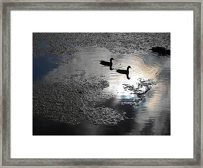 Graceful Living Framed Print by Sheila Silverstein