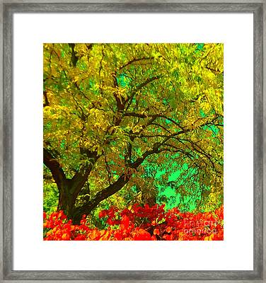 Framed Print featuring the photograph Graceful Locust by Ann Johndro-Collins