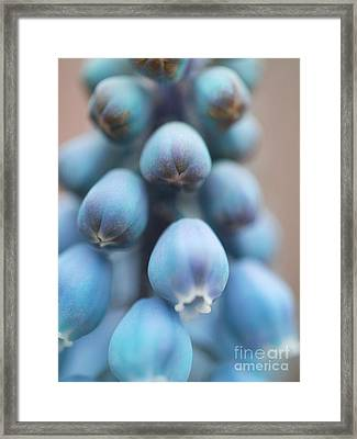 Graceful Nod Framed Print by Irina Wardas