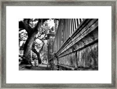 Graceful Old Oak And Fence Two Framed Print by Andrew Crispi