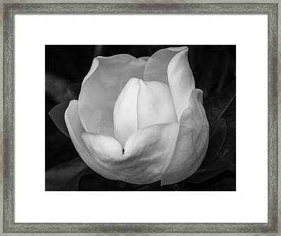 Graceful Opening Framed Print