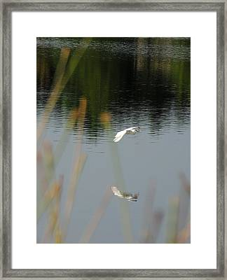 Graceful Framed Print by Teresa Schomig