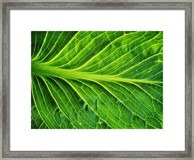 Graceful Framed Print by Tom Druin