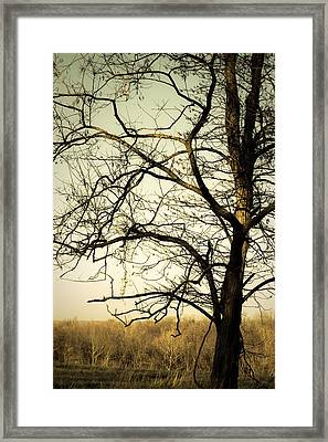Graceful Tree Framed Print by Cara Moulds