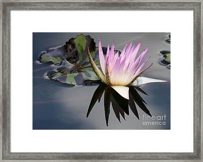 Graceful Water Lily Framed Print