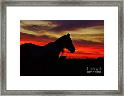 Gracie At Sunset Framed Print by Lynda Dawson-Youngclaus