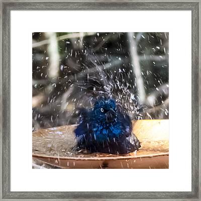 Grackle Bath Framed Print