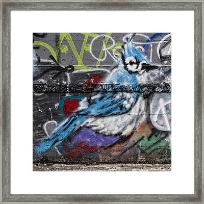 Graffiti Bluejay Framed Print by Carol Leigh