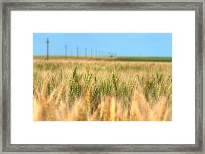 Grain Field - Hdr Photo Framed Print