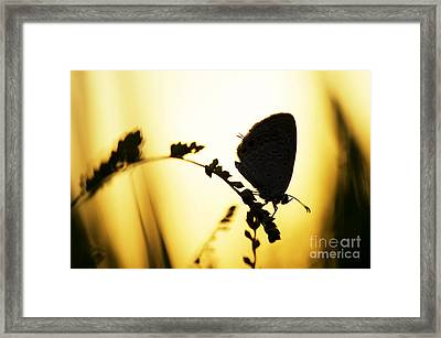 Gram Blue Butterfly Silhouette Framed Print by Tim Gainey