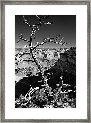 Grand Canyon Bw Framed Print by Patrick Witz