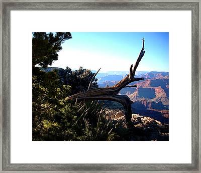 Grand Canyon Dead Tree Framed Print