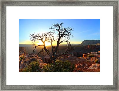 Grand Canyon Gathering The Light Framed Print by Bob Christopher