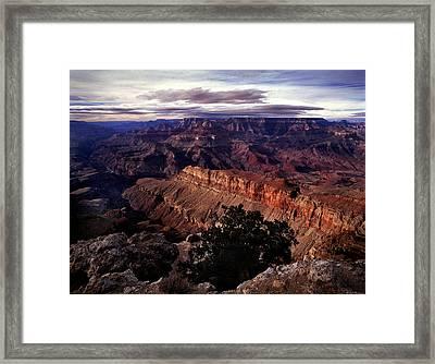 Grand Canyon Golden Ridgeback Framed Print