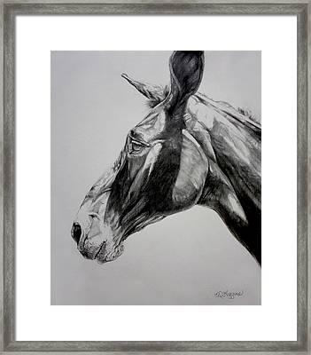 Grand Canyon Mule Framed Print by Derrick Higgins