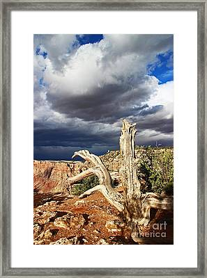Grand Canyon Navajo Point One Thirty Six Framed Print by Donald Sewell