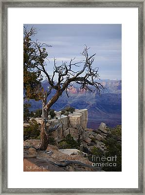 Grand Canyon Overlook Framed Print by Barbara R MacPhail